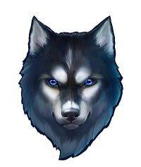 Spinsane ulv
